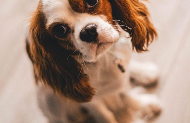Requisitos sanitarios para viajar con animales de compañía desde Reino Unido a la Unión Europea