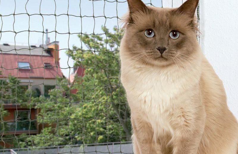 Sistemas de protección para gatos