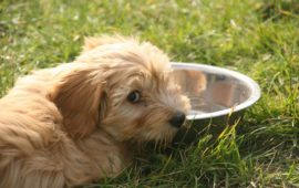 Halitosis en perros, ¿a qué puede ser debido?