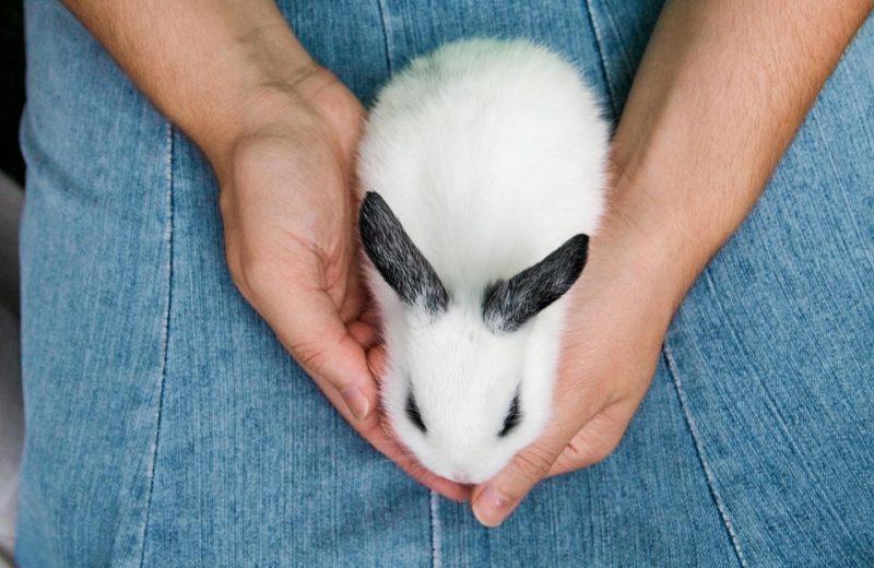 6 alimentos que podrían llevar a un conejo a una urgencia veterinaria