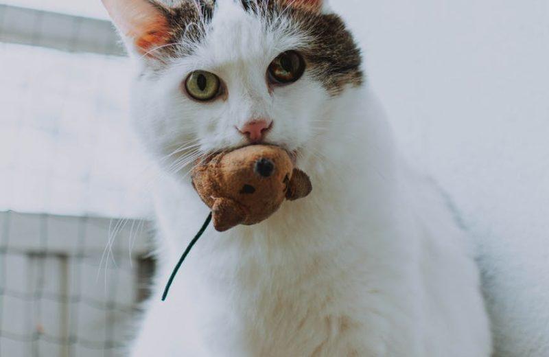 Cómo hacer que tu gato mayor siga en movimiento