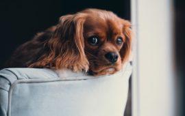 ¿Se puede prevenir la leishmaniosis canina?