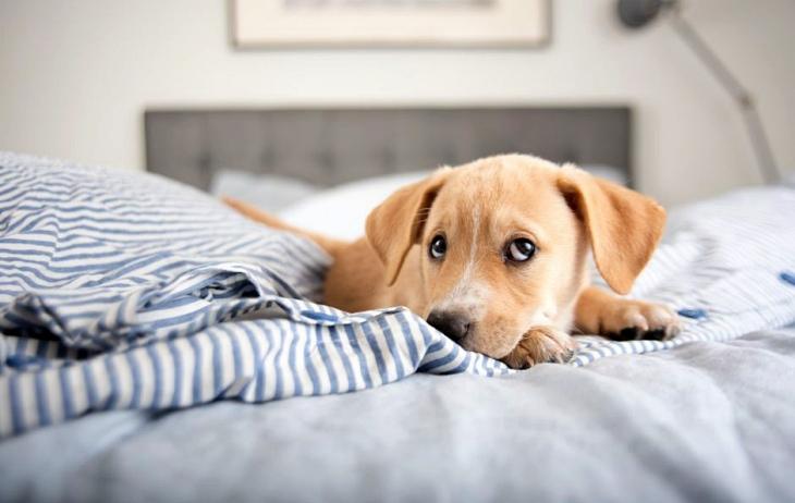 Ventajas y desventajas de dormir con tu mascota