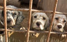 Sacrificio cero de mascotas abandonadas en Baleares