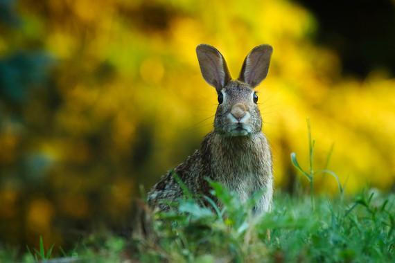 ¿Por qué abundan los conejos en los márgenes de las autopistas?