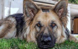 ¿Pueden los perros tener epilepsia?