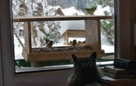¿El gato en casa necesita estimulación sensorial?