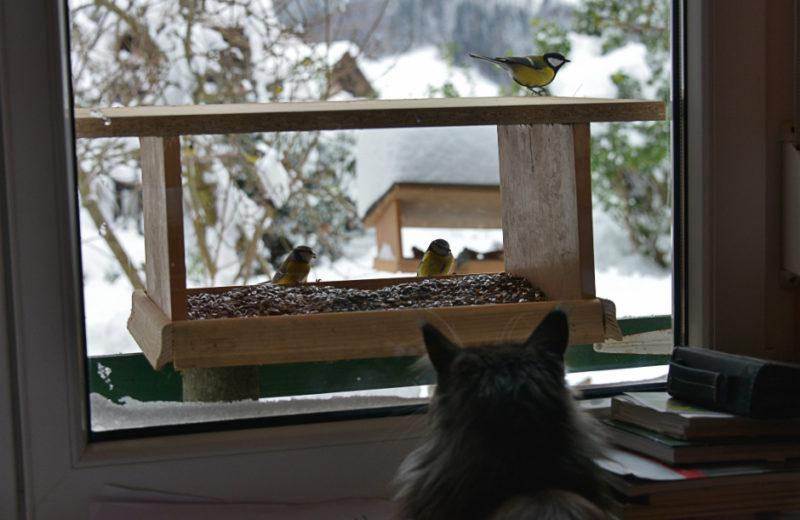 Estimulación sensorial gatos
