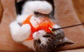 Un juego seguro entre tu gato y los niños