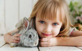 Las urgencias veterinarias más frecuentes en conejos