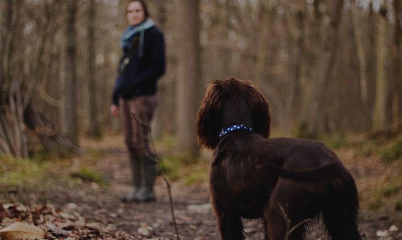 Todo lo que tienes que saber sobre los paseos de tu perro