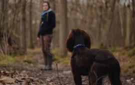 Los veterinarios de Castilla y León piden que se pueda pasear a los perros en toque de queda