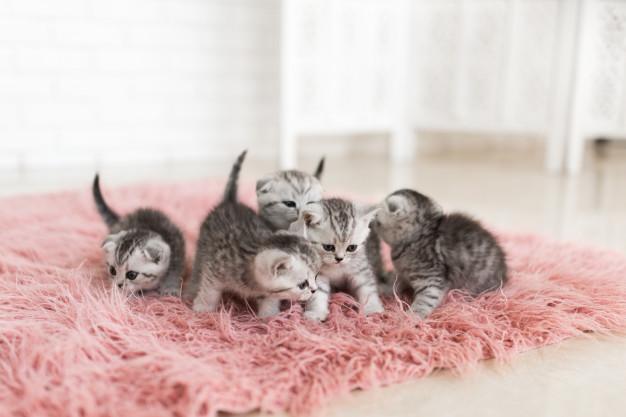 Enfermedades gatos recién nacidos