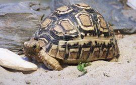 Alimentación en las tortugas de tierra