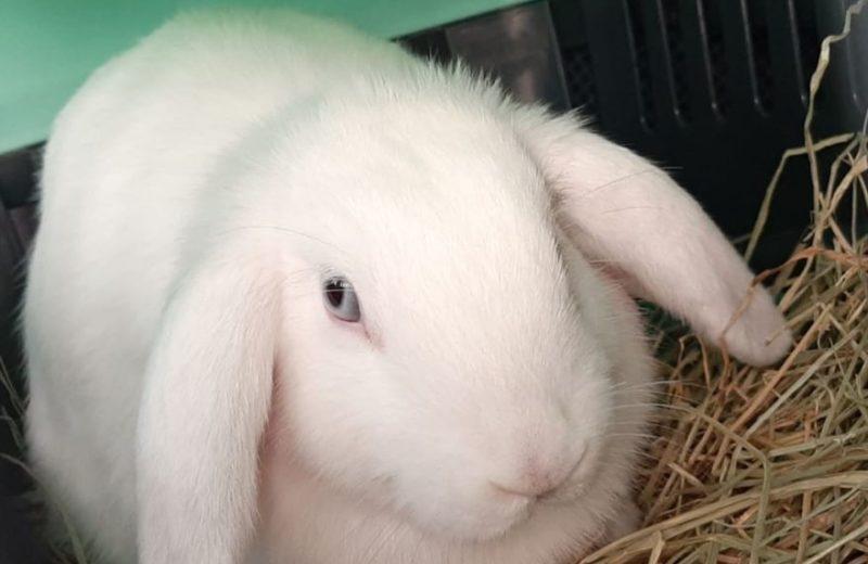 Programa de bienestar animal en conejos