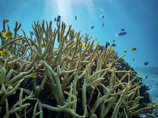 La acidificación de los océanos no afecta al comportamiento de los peces