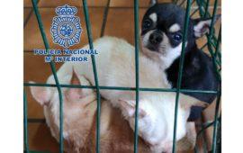 Libertad provisional para uno de los detenidos en la operación de los criaderos ilegales