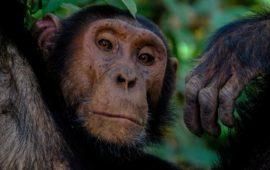 Te presentamos a Rebeca Atencia directora del Instituto Jane Goodall en la República Democrática del Congo