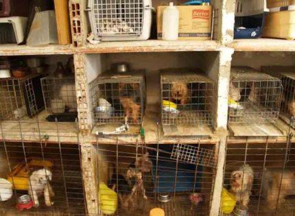 Los eurodiputados reclaman medidas estrictas frente al comercio ilegal de mascotas.