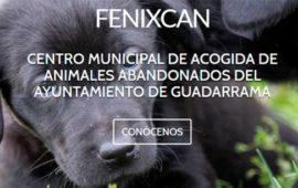 Entrevista al Centro de Protección Animal Fenixcan