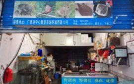 El coronavirus chino, ¿está vinculado a la comercialización de animales silvestres?