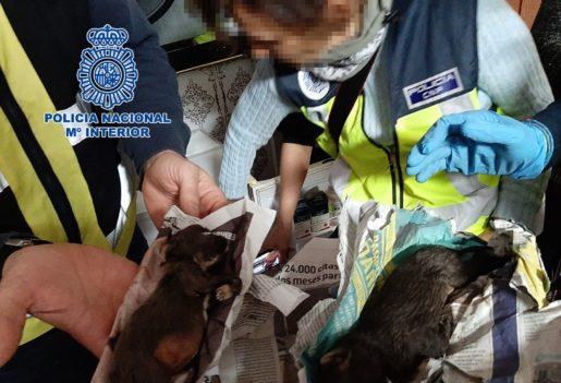 Perros criadero ilegal