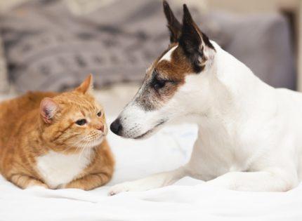 El 28% de perros y el 4% de los gatos recogidos por protectoras en 2020 llevaba microchip