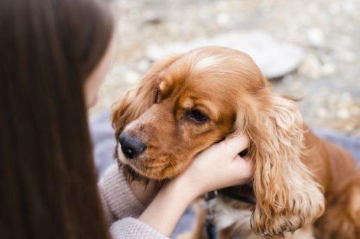 Síntomas hernia discal en perros