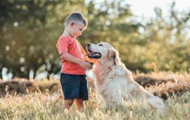 ¿Qué son las Terapias Asistidas con Animales (TAA)?