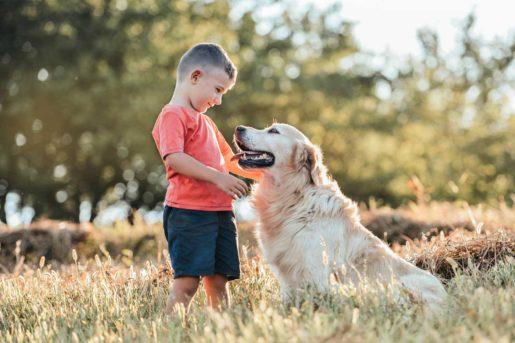 Terapias asistidas con animales - TAA