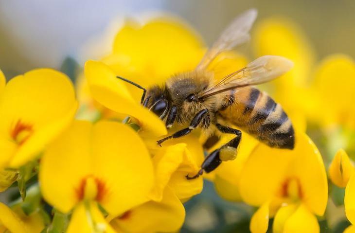 Tecnología verde para proteger a las abejas de plagas y patógenos