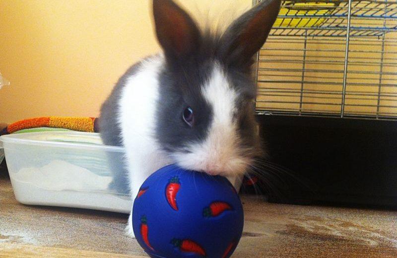Juguete para conejo