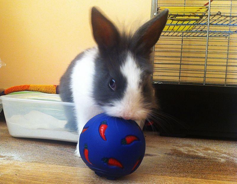 Necesidades de actividad física. mental y social en los conejos