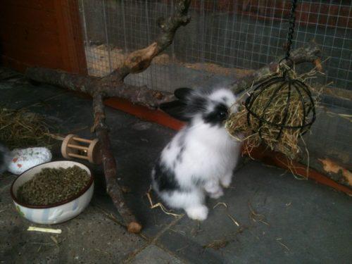 Conejos con soporte para alimento.