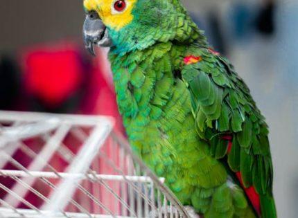 Programa de bienestar en aves – Alojamiento de aves