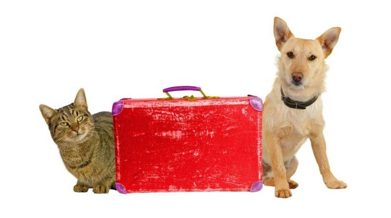 Vacaciones perros y gatos
