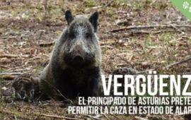 El Principado de Asturias pretende permitir la caza durante el estado de alarma