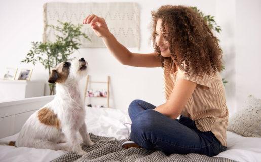 En casa con tu perro