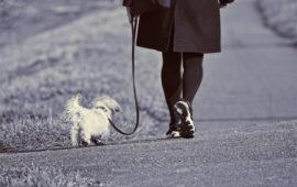 ¿Puedo sacar a mi perro durante la cuarentena del Covid-19?