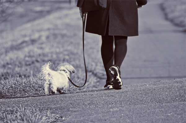 Paseando perro cuarentena covid-19