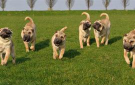 El World Dog Show, el Mundial Canino, queda aplazado hasta el mes de julio