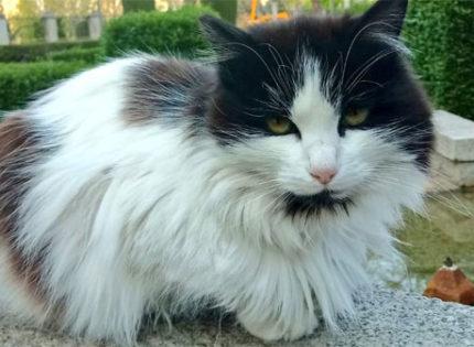 Gatos y demás fauna desatendida en los parques de Madrid