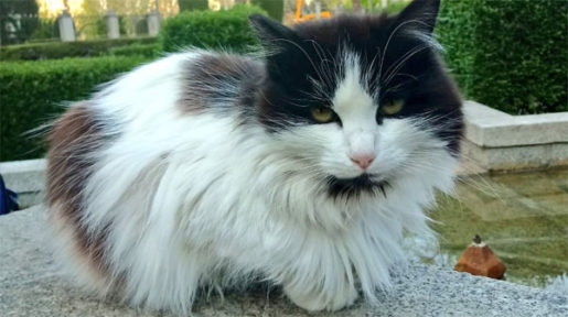 Fauna desatendida en Madrid -Gato colonia del Retiro - Agar