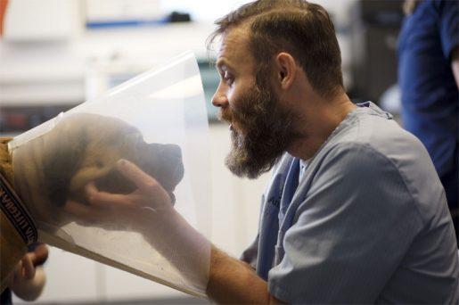 Anicura revisión veterinaria