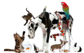 Adopción de mascotas, todo lo que necesitas saber