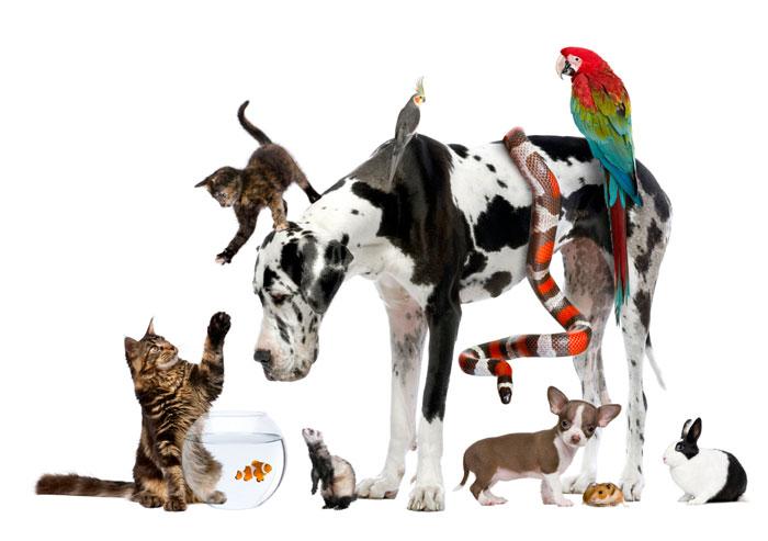 Animales para adoptar