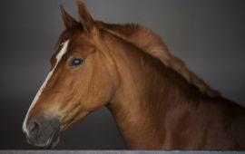 El caballo: un gran compañero