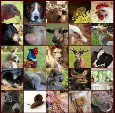 Derechos Animales, Bienestar animal y el movimiento animalista