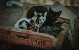 AVEPA crea una guía para el manejo ético de las colonias felinas