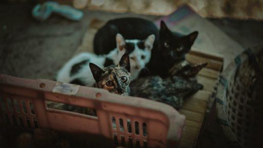 Colonias felinas gatos abandonados